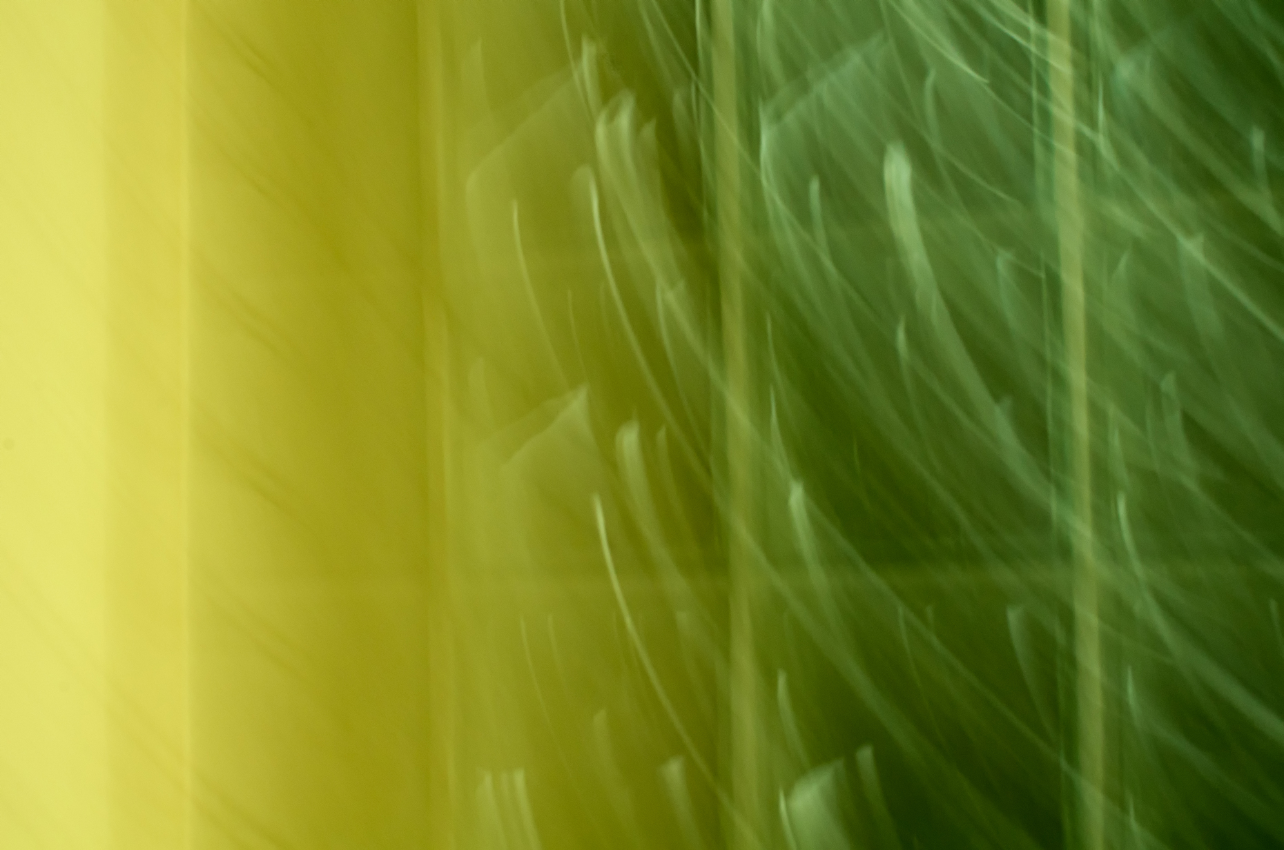 Abstract-Shades-of-Green-2.jpg