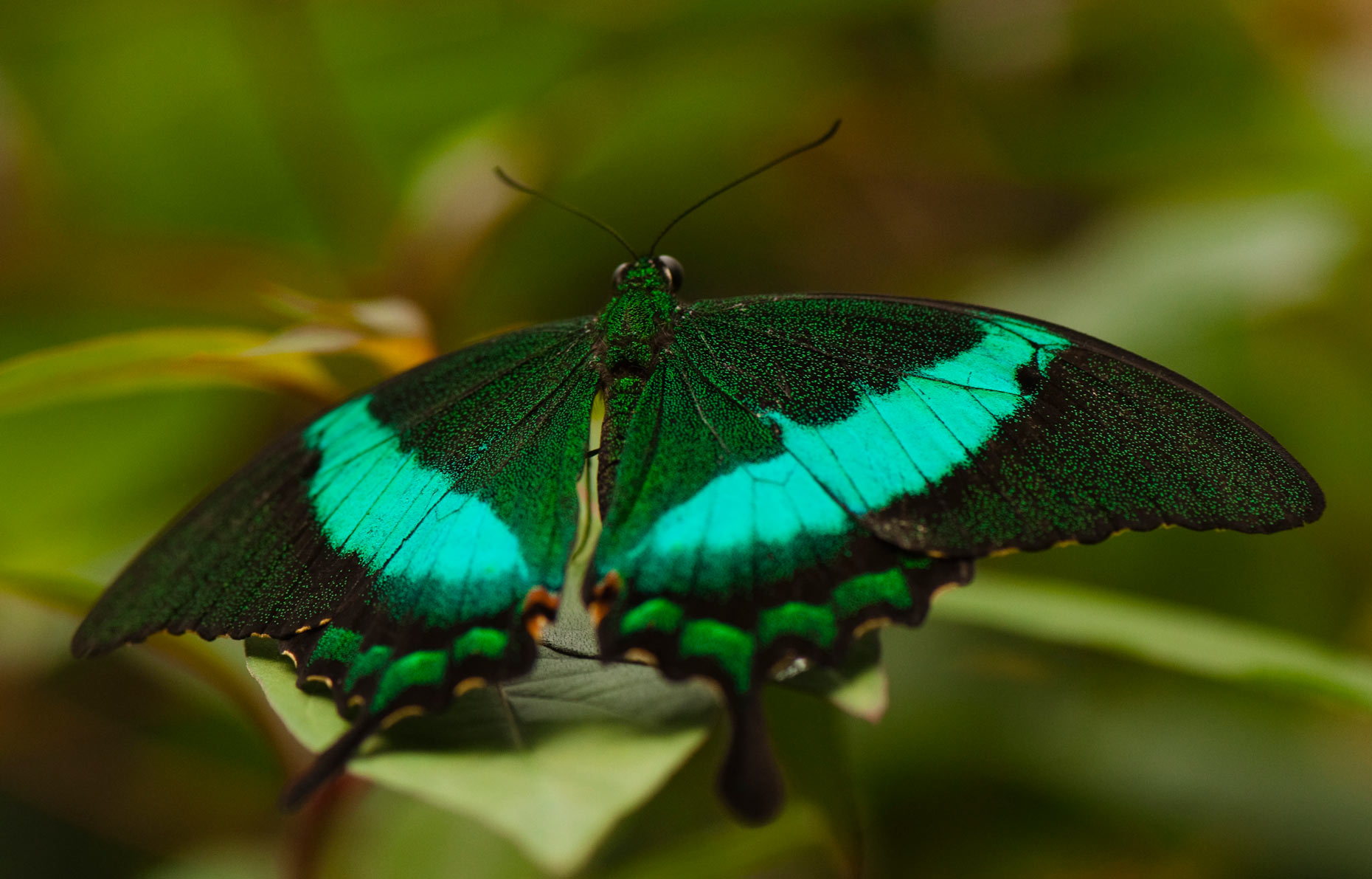 Butterfly-Photos-Natures-Miracle-Laria-Saunders.jpg