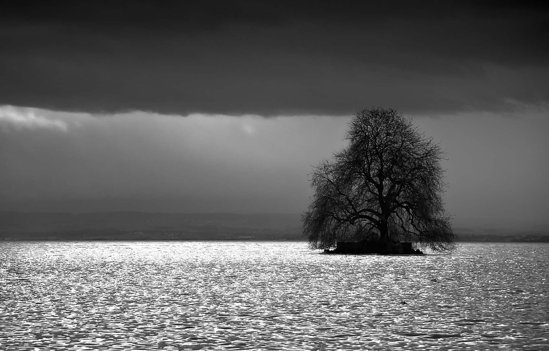 Switzerland-Photos-Tree-of-Hope-Laria-Saunders.jpg